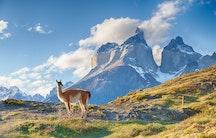 Alpaca als Symbolbild fuer arbeiten in Chile