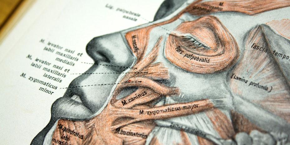 Anatomie Gesicht Symbolbild Hochschulmedizin