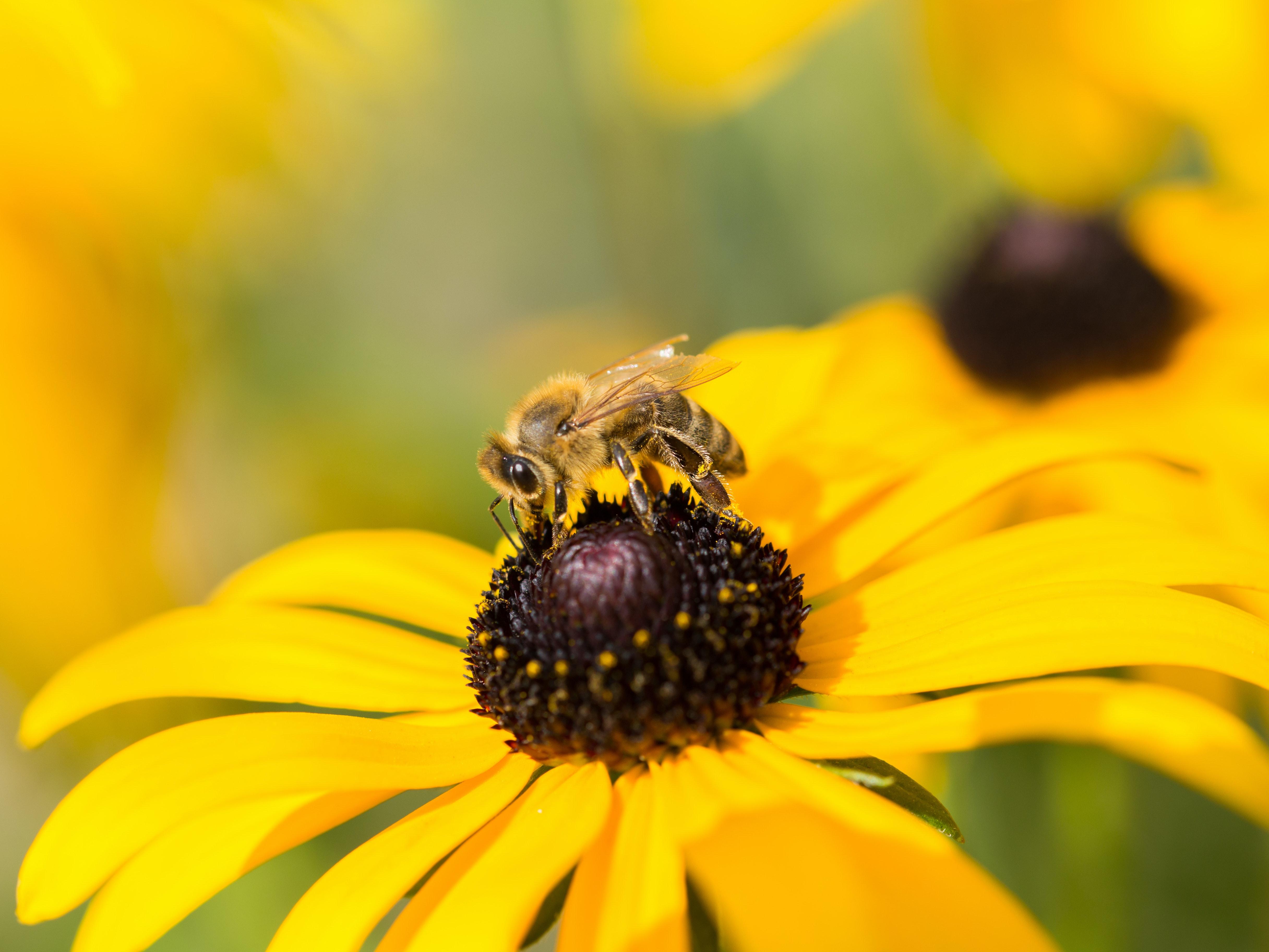 Biene Blume Symbolbild studieren und arbeiten