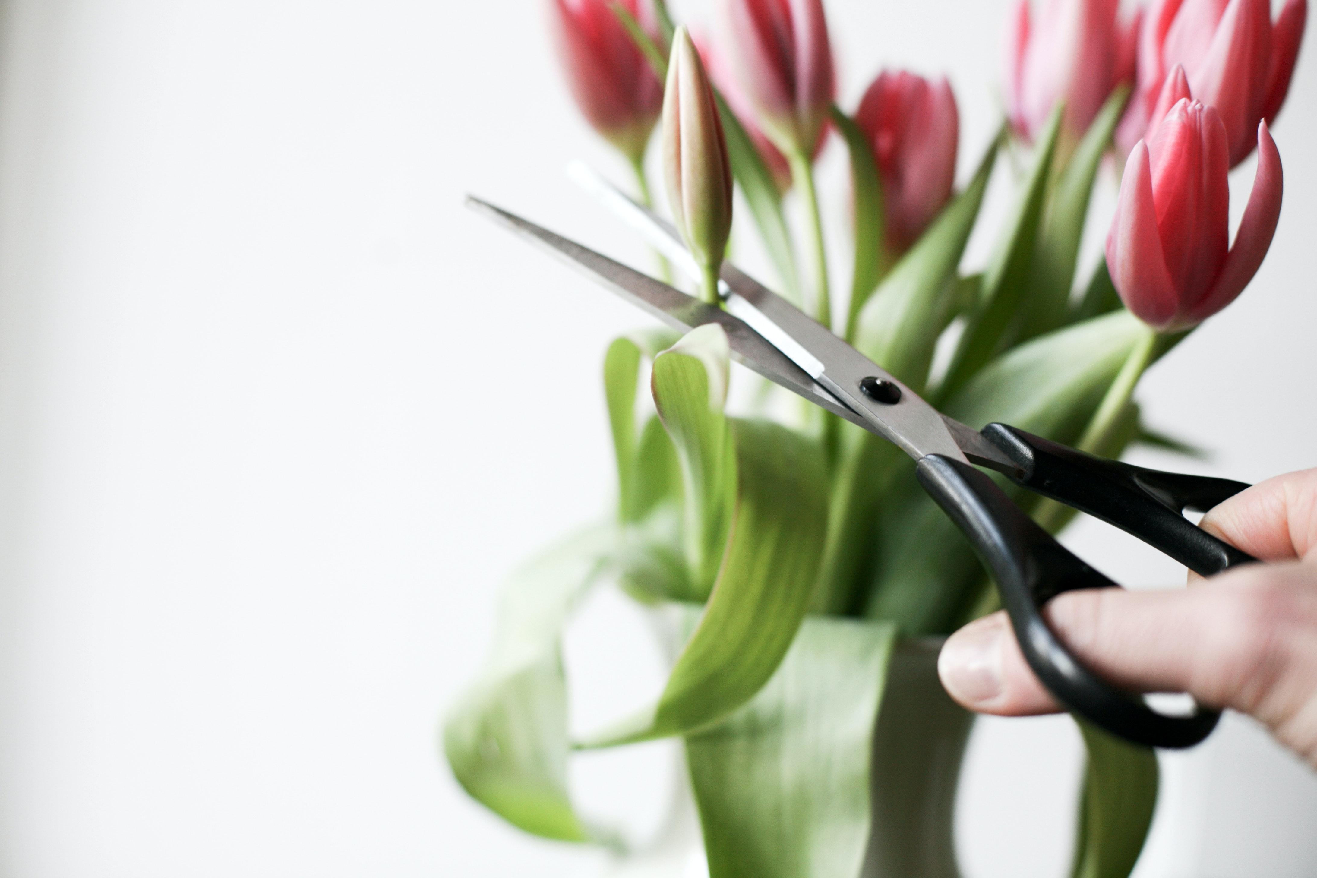 Blume Schere Symbolbild Promotion abbrechen