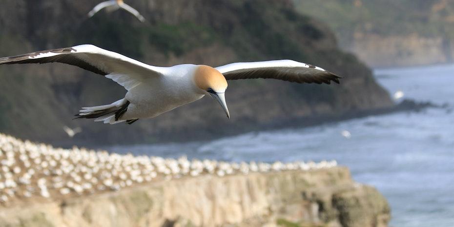 Fliegender Vogel als Symbolbild fuer Biologie Berufsaussichten