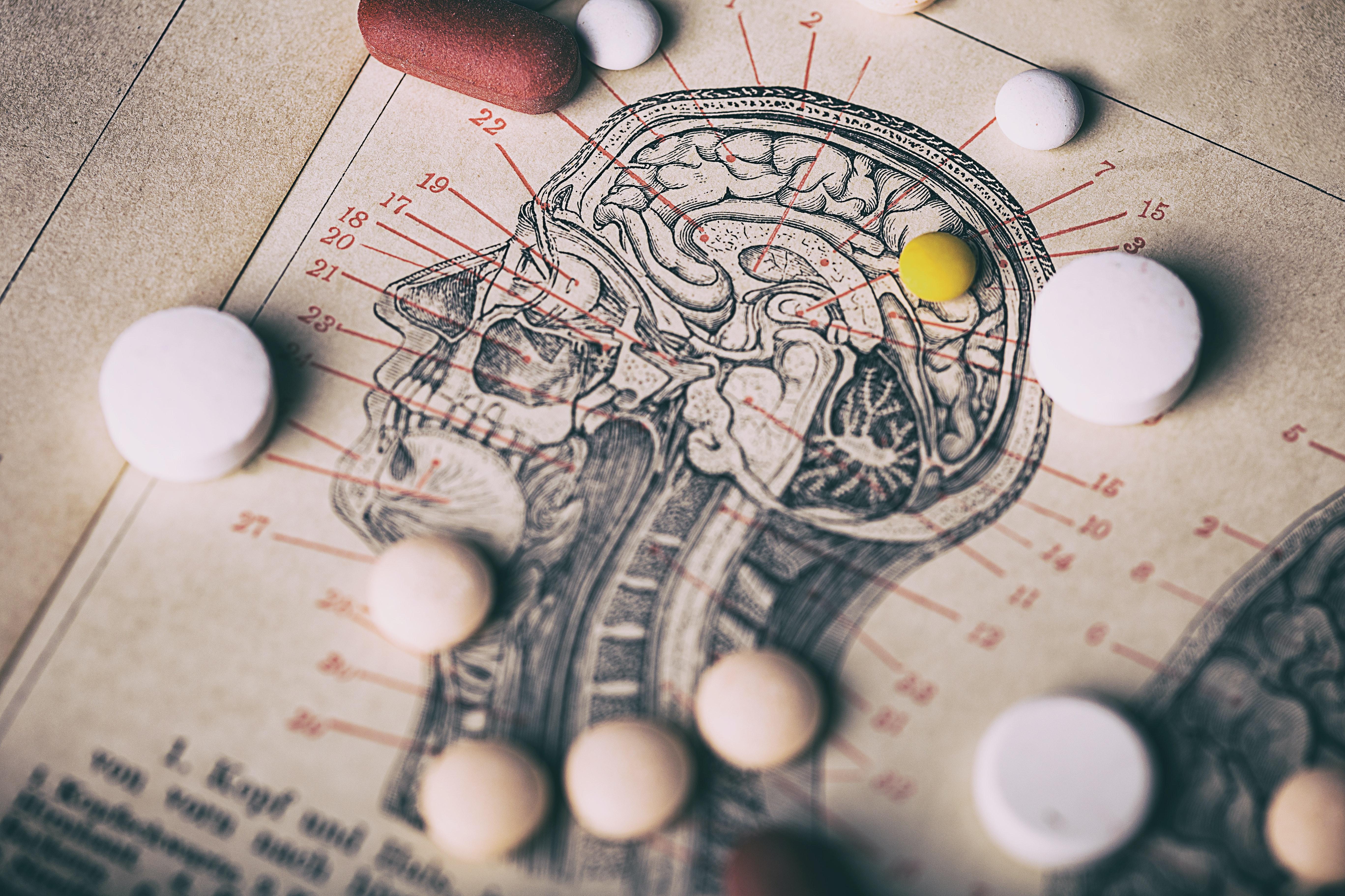 Gehirn Querschnitt Symbolbild Gehalt Arzt Humanmedizin