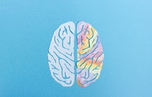 Gehirn als Symbolbild fuer Aufgaben Professur