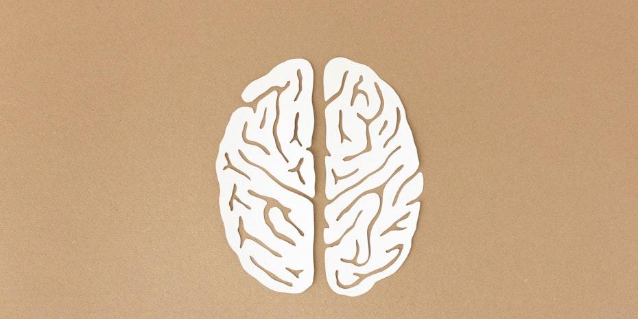 Gehirn als Symbolbild für Wirtschaftspsychologie Gehalt