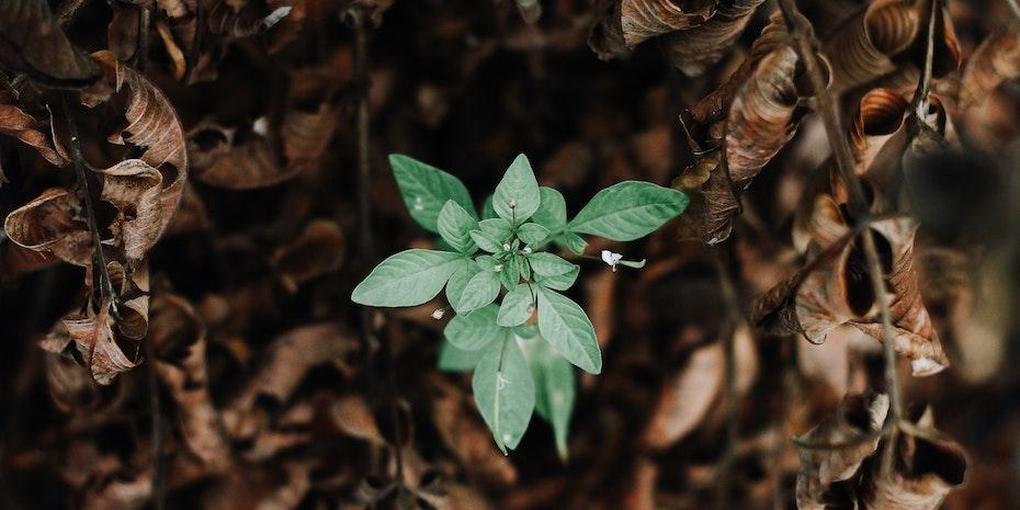Gruene Blätter Symbolbild Berufseinstieg Geisteswissenschaftler