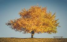 Herbstbaum als Symbolbild fuer Altersgrenze Beamte