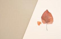 Herbstlaub als Symbolbild fuer Arbeiterkind