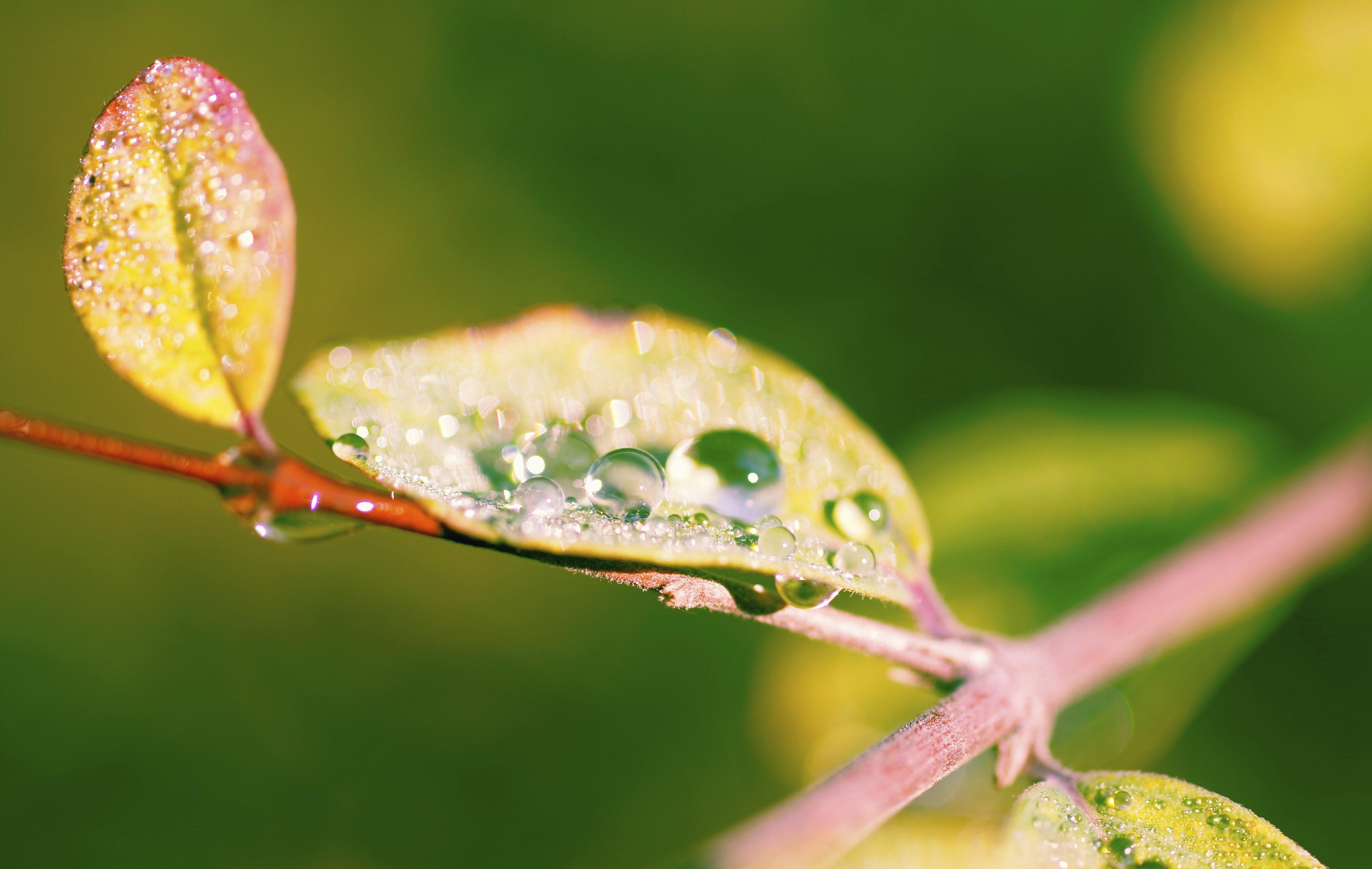 Morgentau Symbolbild Biotechnologie Gehalt