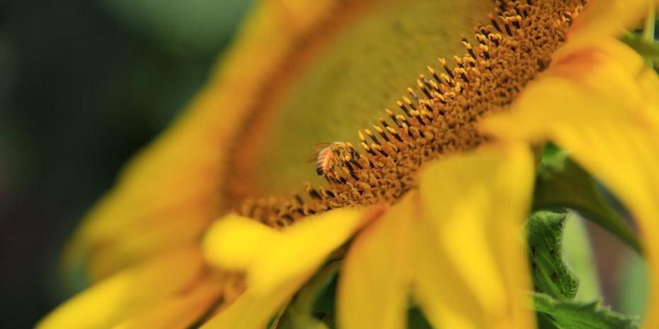 Natur Biene Symbolbild nachhaltig leben