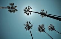Palme als Symbolbild für Auswandern
