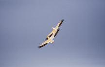 Parallel fliegende Voegel Symbolbild Promotion berufsbegleitend