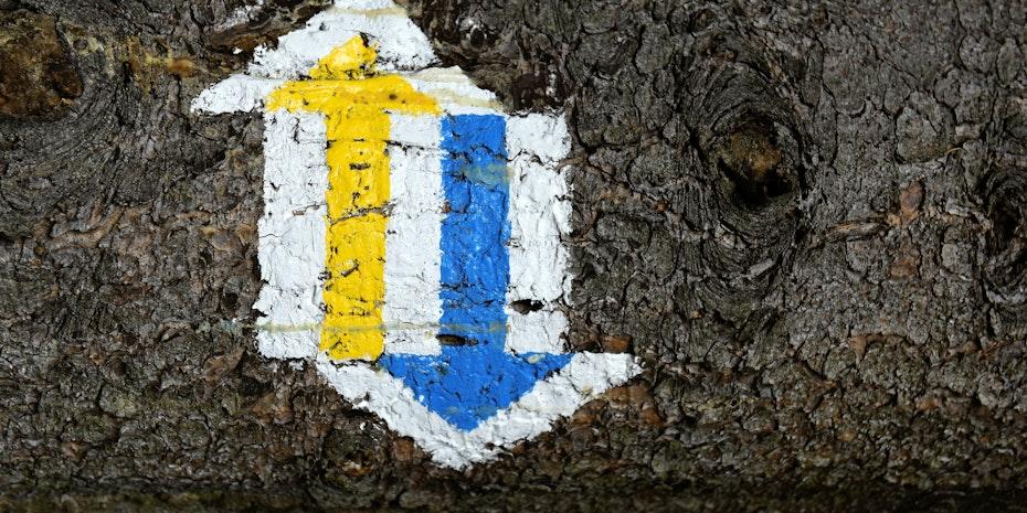 Pfeile Baum Symbolbild Bachelorarbeit Thema finden