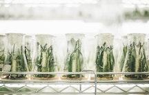 Pflanze Symbolbild Life Sciences Unternehmen