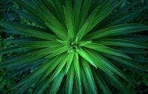 Pflanzen Natur Symbolbild Bewerbung Naturwissenschaften