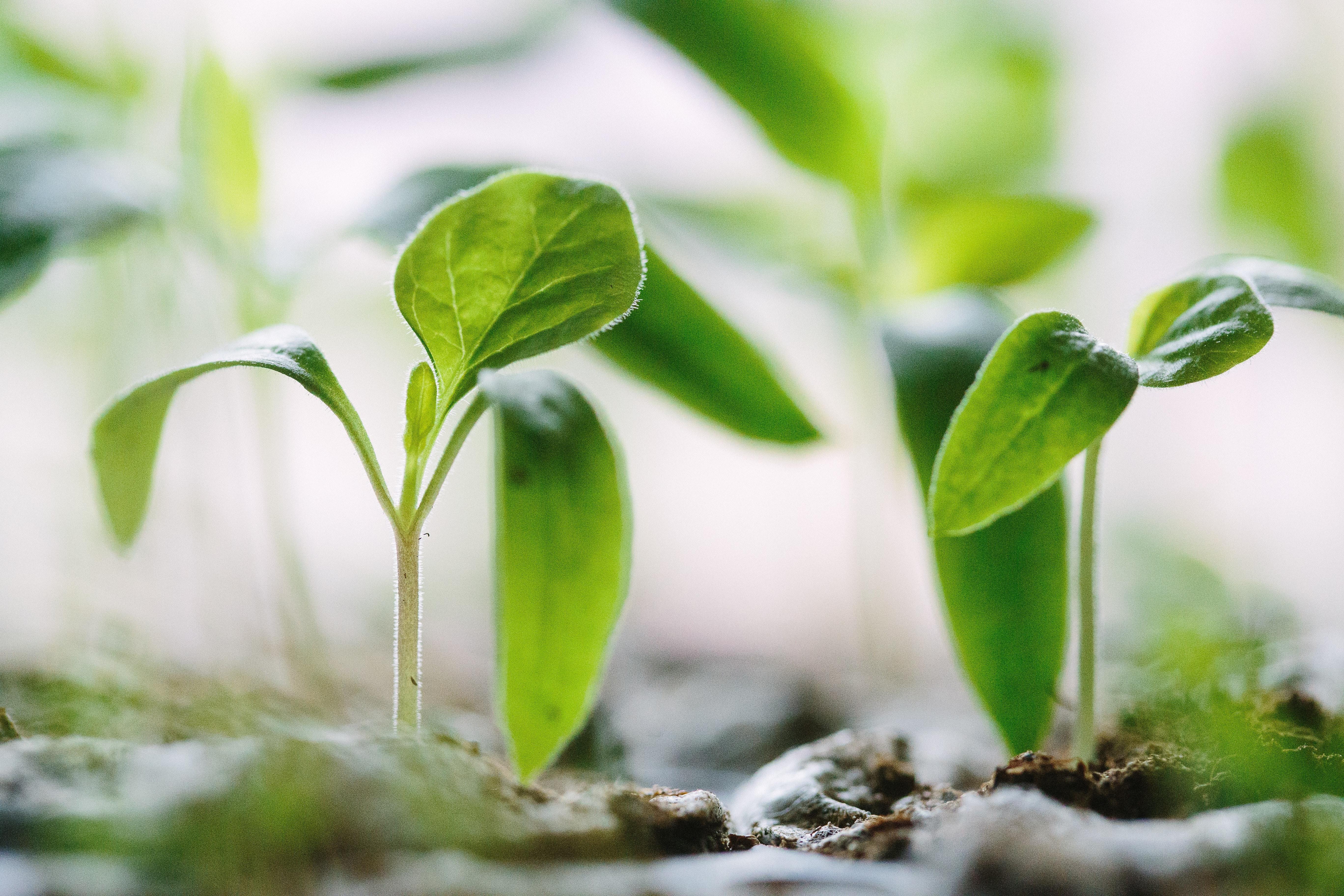 Pflanze Symbolbild Berufe mit Naturwissenschaften
