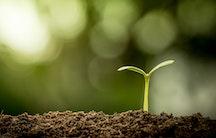 Pflanze Symbolbild Gehalt Life Sciences