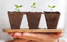 Pflanze Symbolbild Wissenschaftsethik