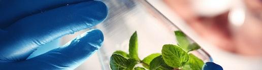 Reagenzglas Symbolbild Wissenschaftler Gehalt