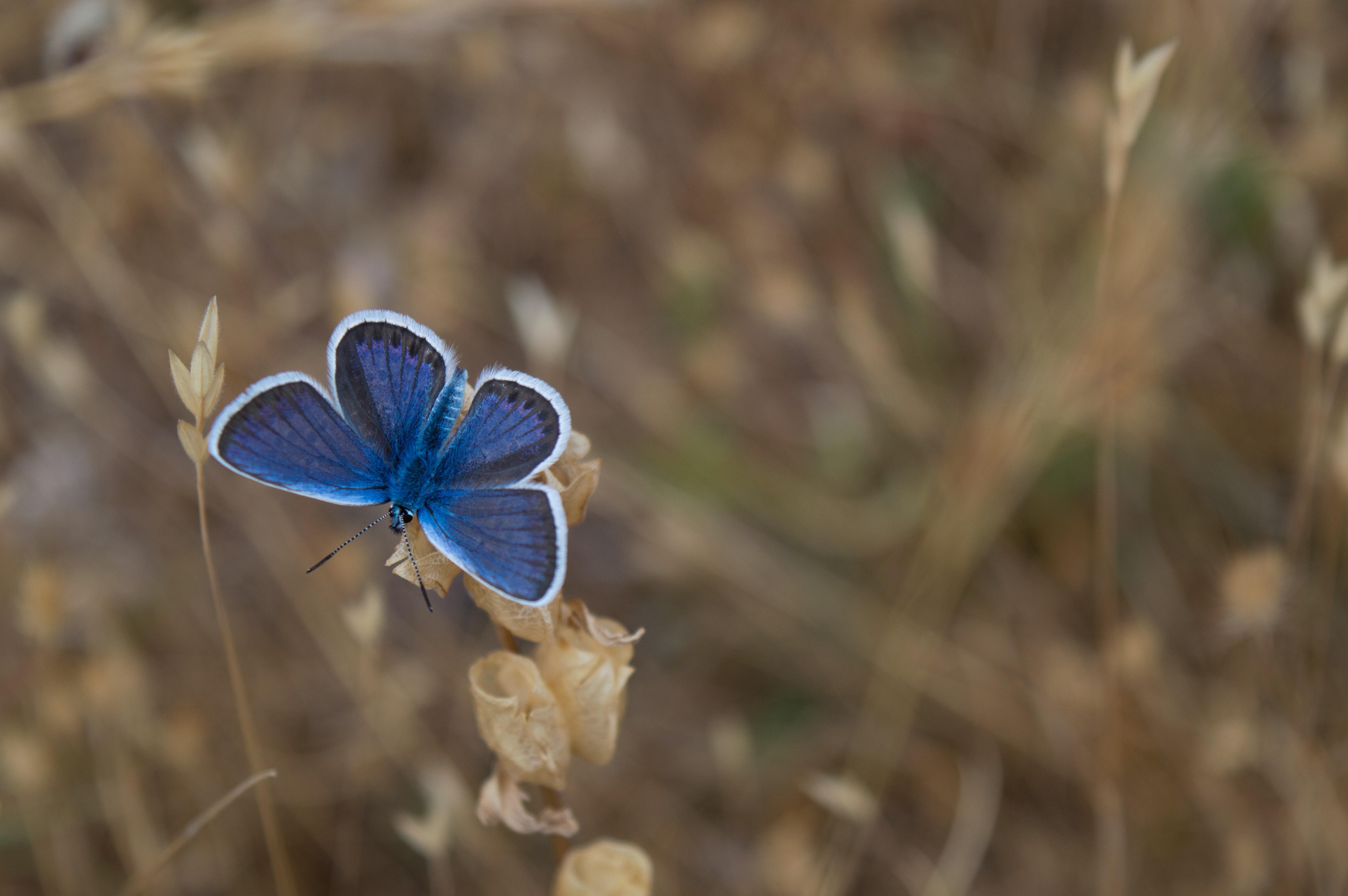Schmetterling als Symbolbild fuer Stipendien Naturwissenschaften