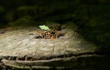 Spross Baum Symbolbild arbeiten in der Entwicklungshilfe