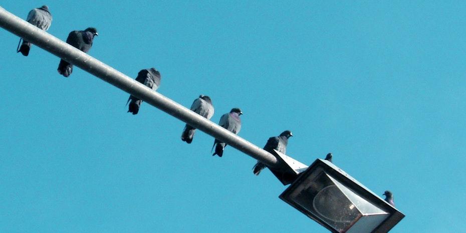 Tauben Reihe Symbolbild Berufungskommission Professur