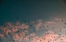 JPO - Himmel, Vögel
