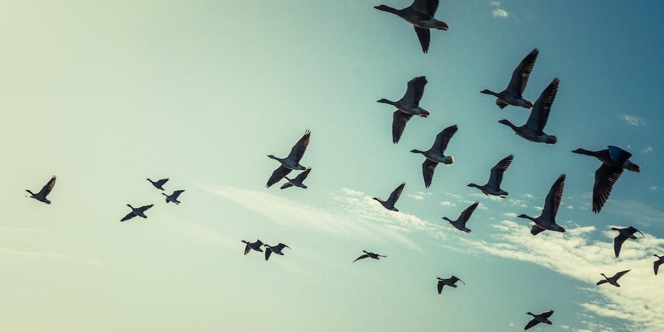 Vögel Symbolbild Bewerbung Biologie