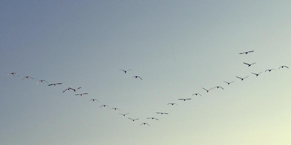 Vogelschwarm Symbolbild Forschungsfreiheit Forschungssemester