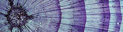 Zellstruktur Symbolbild Mikrobiologie Gehalt